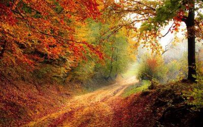 Caída de los precios con la caída de las hojas